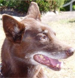 photo indications cancer dog